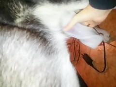 Lesbian Horse