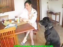 Dog amateur casal en rio