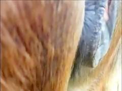 Posando rubia y caballo