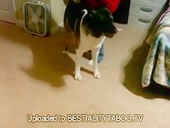 El perro remata el trabajo