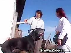 Perros y mujeres enmascaradas