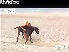 Amante animal para la zoofilia