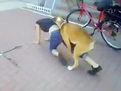 ni el perro la mira
